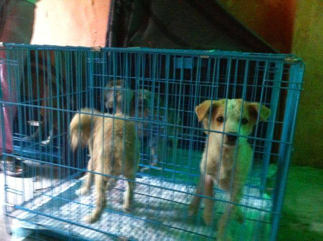 Animal Rescue Project - Jan-Feb 2016 (20)